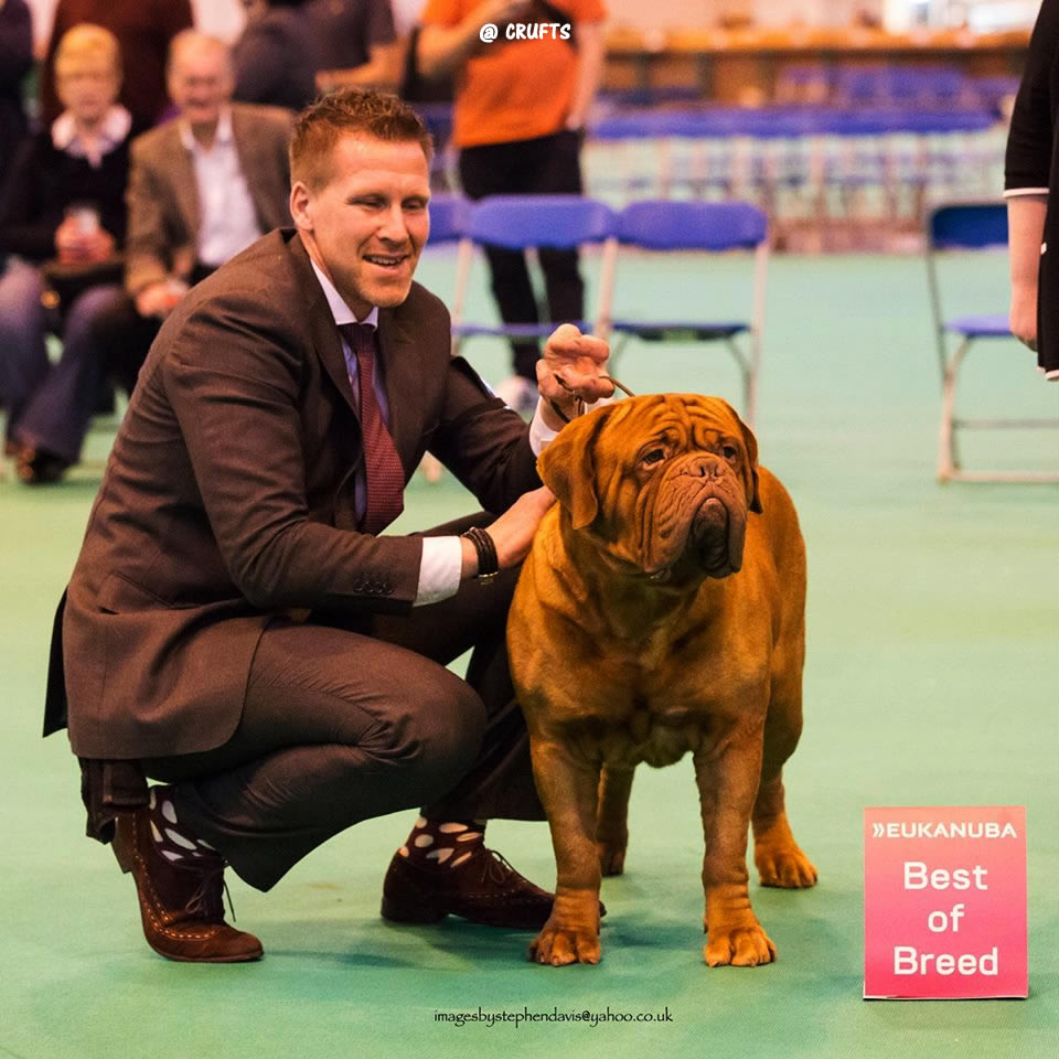 Toto at Crufts