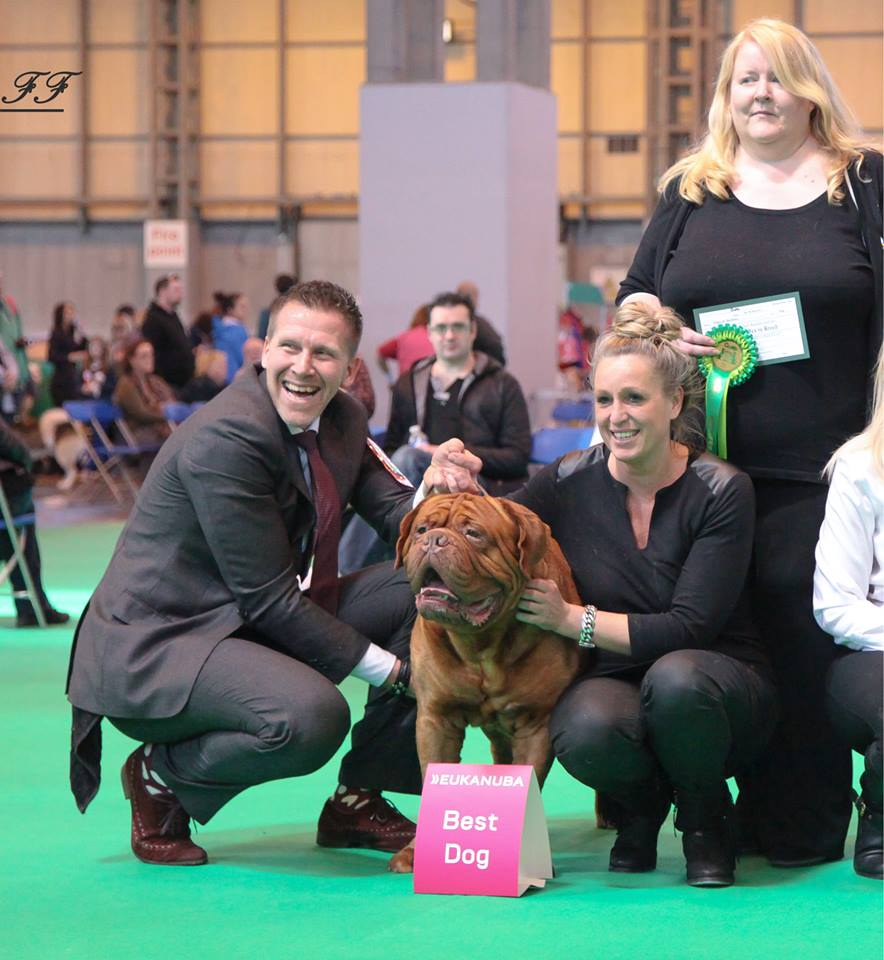 crufts2015best