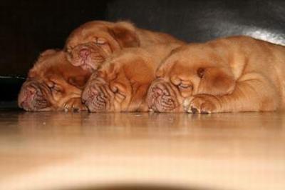 pups20095wks